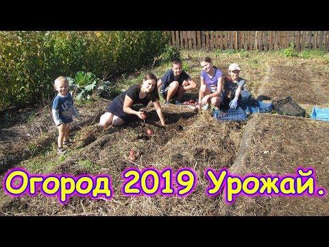 Огород 2019. Сбор