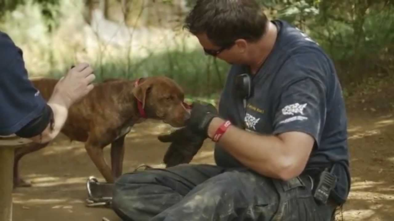 50 Dogs Rescued from Suspected Dogfighting Operation - YouTube