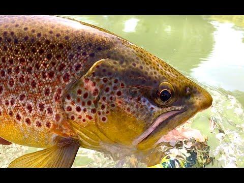 Oregon Fly Fishing Trip