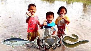 Bocah Petualang  Di Sawah, Cari Ikan, Belut, Kepiting? | Kids Adventurer In The Paddy Fields