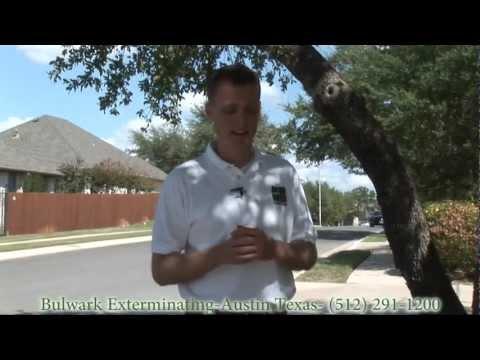 Austin Texas Ant Control - Acrobat Ants - Bulwark Exterminating
