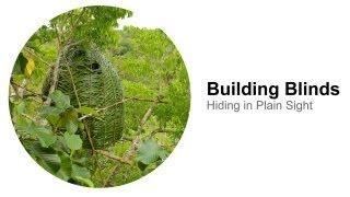 Building Blinds: Hiding in Plain Sight