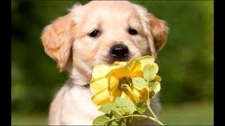 Аудиосказка о Собачке Жуже, которая не Любила Складывать Игрушки - Читает Мама