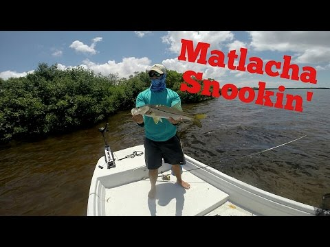 Matlacha Snook Fishing