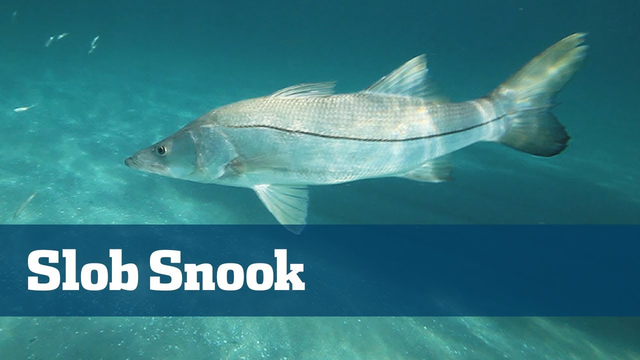 slob snook fishing on light tackle outside south florida inlets, Reel Combo