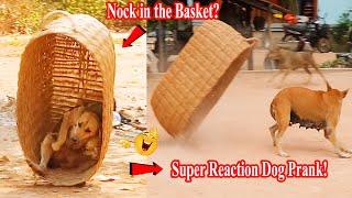 Huge Handmade Basket vs Prank Sleep Dog Super Reaction Dog Prank!