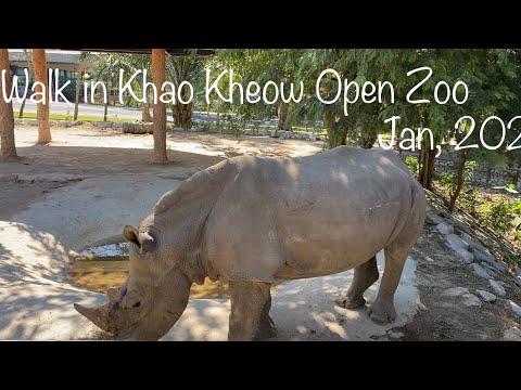Walk in Khao Kheow Open Zoo สวนสัตว์เปิดเขาเขียว