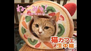 【猫カフェ生中継】多摩センター「たまねこ」1118 月