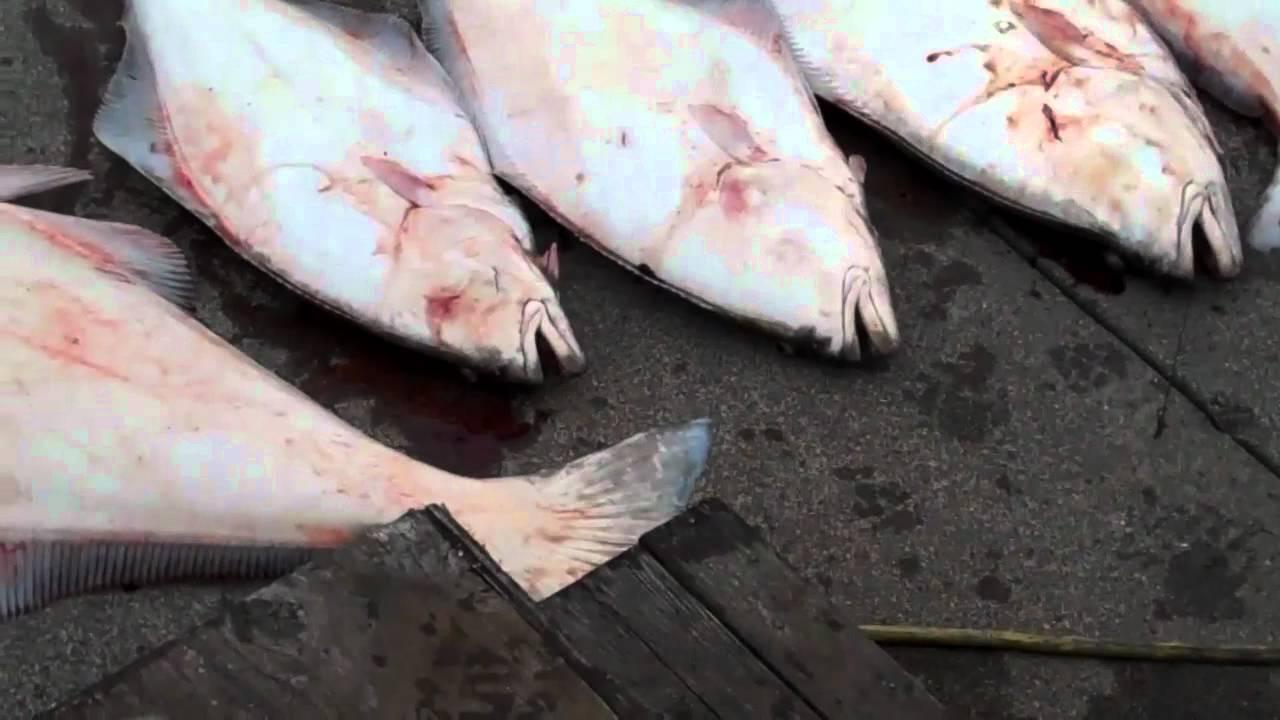 Charter fishing florence oregon 1 541 999 9282 youtube for Newport oregon fishing charters
