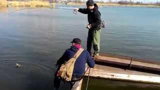 Смешное видео про рыбалку. Редкий случай на рыбалке с ультралайтом. Нежданчик - карп на спиннинг.(Смешное видео про рыбалку. Редкий случай на рыбалке с ультралайтом. Нежданчик - карп на спиннинг. Случайный..., 2015-09-06T20:11:21.000Z)