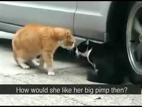 Very Angry Cats lol lmao