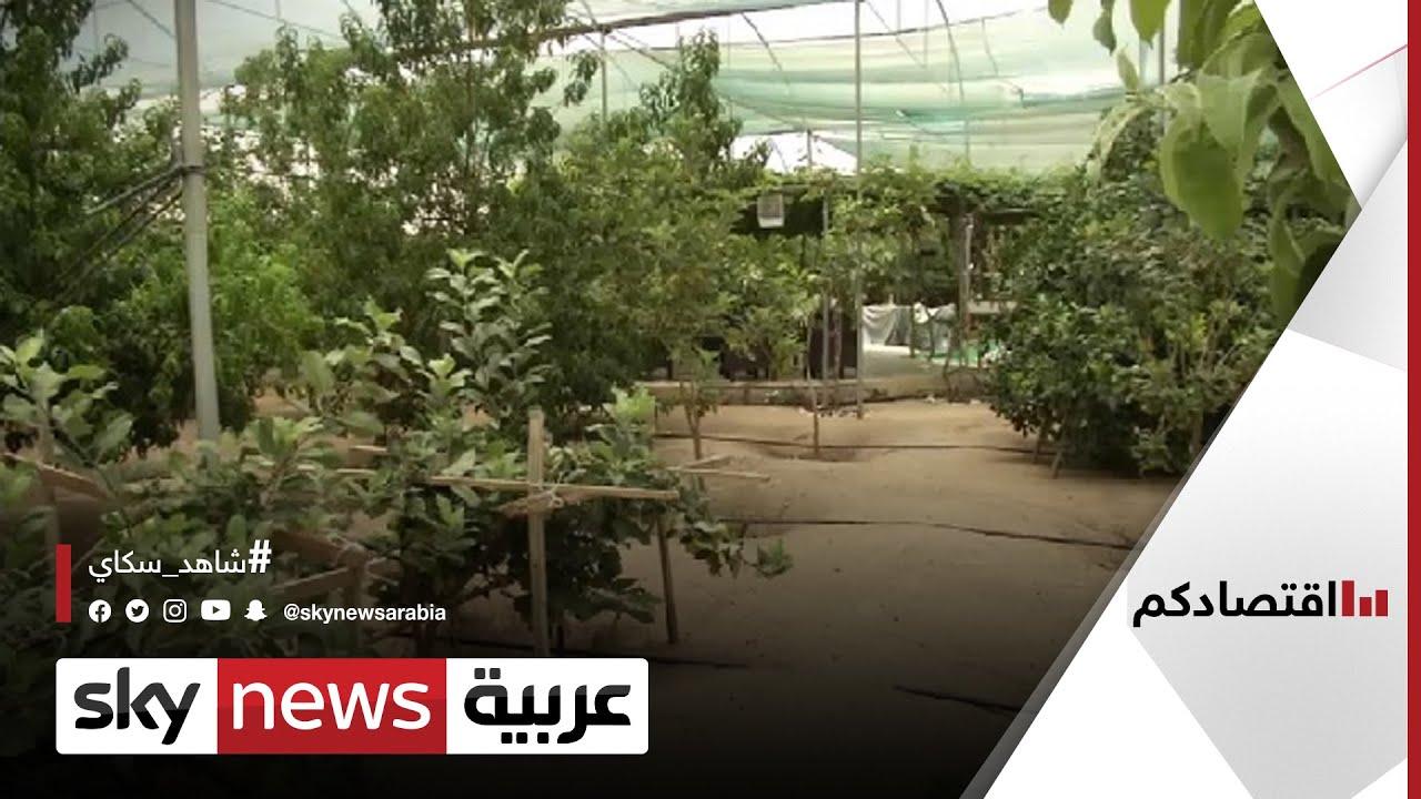 قرارات حكومية بالكويت لدعم المنتجات الزراعية المحلية| #اقتصادكم  - نشر قبل 28 دقيقة