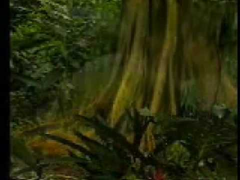 Amazônia (Manchete) - Memória da TV