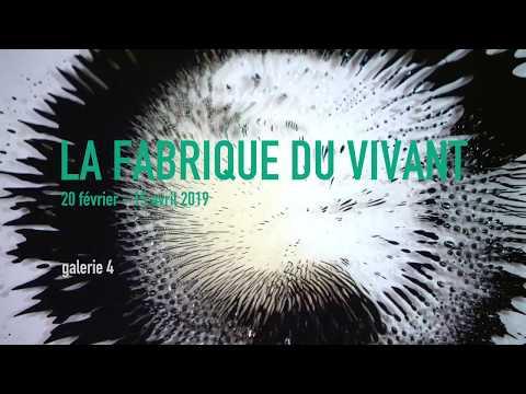 "Tissue engineered stingray in exhibition ""La fabrique du vivant"" at Centre Pompidou, Paris"