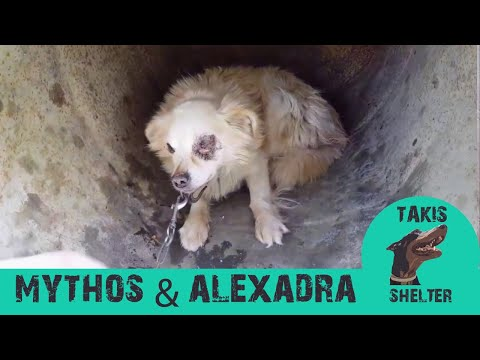 Takis Shelter - (Chained Dogs) Mythos & Alexandra