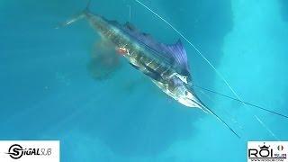 Chasse sous marine -- Marc Breysse Espadon voilier Sailfish 27 Kg Madagascar -- Team RoiSub SigalSub