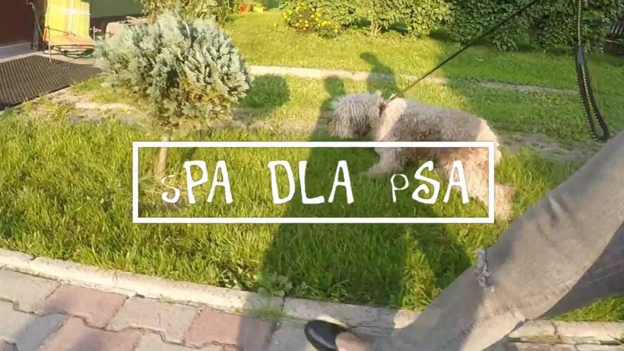 Spadlapsa Cieszyn Psi Fryzjer Youtube