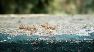 Ant Story - Shot with ZTE Nubia Z11 mini S