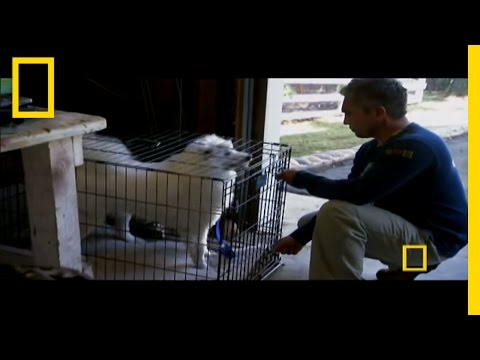 Uncaging Cotton | Dog Whisperer