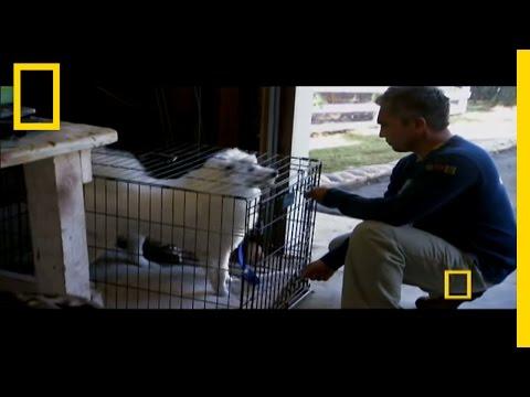 Uncaging Cotton | Dog Whisperer
