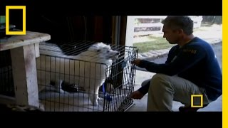 Dog Whisperer: Uncaging Cotton