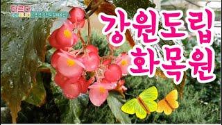 서울근교 당일치기 춘천 가볼만한곳 강원도립화목원