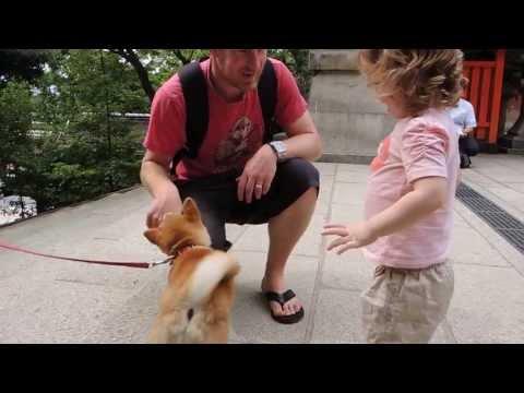 柴犬ココロ 少女に出会う Shiba inu meets a little girl