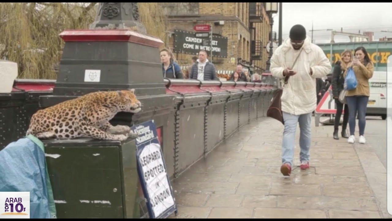 هذا الرجل لم يكن يعلم أن هناك نمر في المكان شاهد ماذا فعل