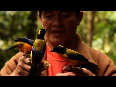 L\'Equateur, paradis d\'oiseaux exotiques