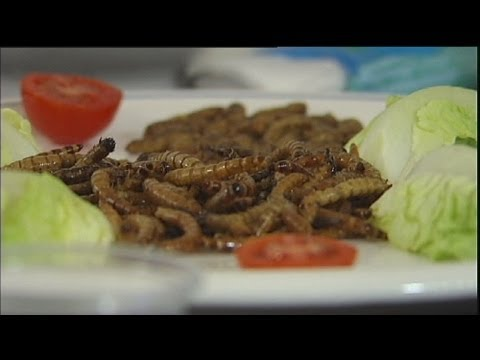 euronews science - Bugs for breakfast, anyone?