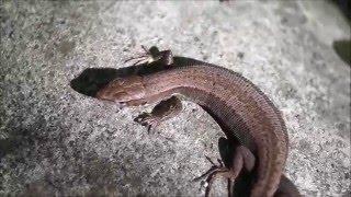 Ящерицы. Познавательное видео для детей. Lizards. Educational videos for children.