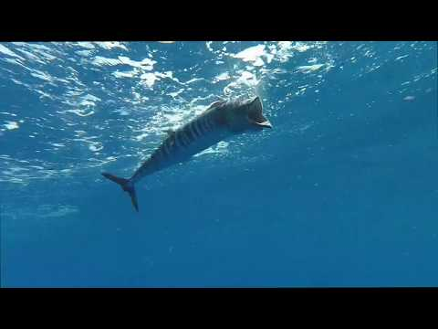 Outer Banks Offshore Fishing Charter - Tuna, Mahi, Wahoo