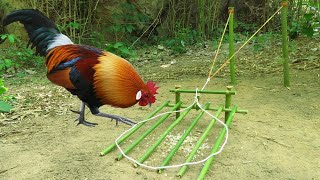Easy Wild Chicken Trap Using Bamboo With Rubber Band - How To Make Wild Chicken Trap On The Mountain