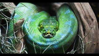 Самый опасный остров на планете!!! Змеиный остров КЕЙМАДА-ГРАНДИ