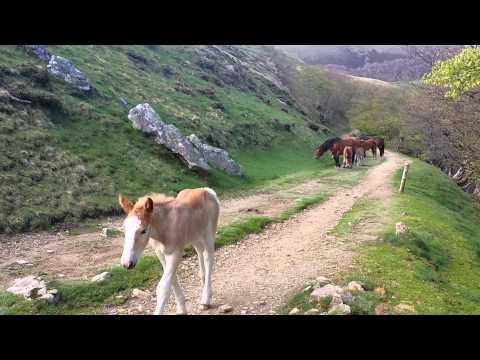 Local Inhabitants - Camino de Santiago
