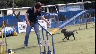 Niko Staffordshire   Agility Lessons #2 And #3 Begginers