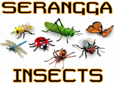 Aneka gambar   Mengenal serangga   Mudah dan menyenangkan untuk anak belajar
