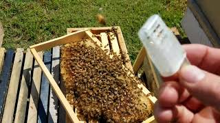 Go here to order Bees, and supplies. We ship. http://www.barnyardbe...