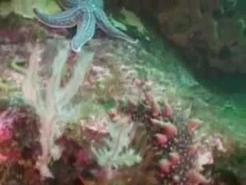 Tours-TV.com: Diving in Sakhalin