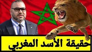 L'Histoire Du Lion Marocain - القصة الحقيقية للأسد الأطلسي البربري المغربي