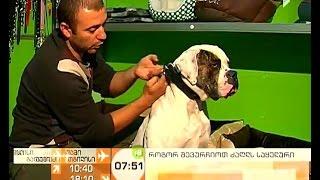 როგორ შევარჩიოთ ძაღლის საყელური