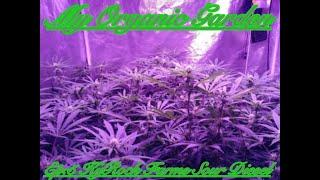 My Organic Garden- Ep:5 KyRock Farms Sour Diesel Clones