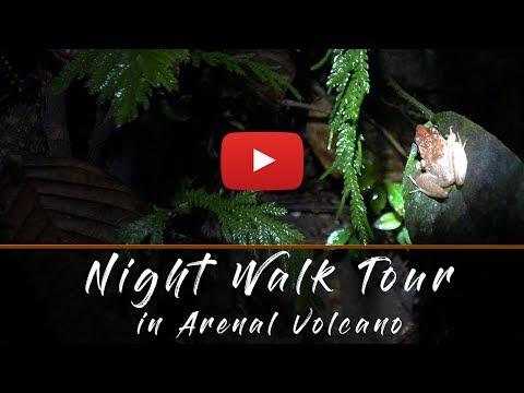 Arenal La Fortuna night walk, Costa Rica