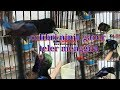 Colibri Ninja Teler Menggila  Mp3 - Mp4 Download