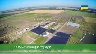 MegaPlant - крупнейший украинский промышленный питомник растений открытого грунта(Заложенный в 2006 году питомник MegaPlant общей площадью 200 га расположен в Киевской области (Фастовский район,..., 2014-09-17T08:57:54.000Z)