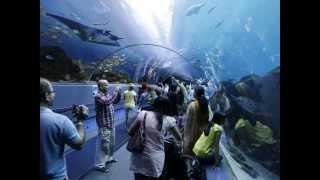 The biggest aquarium in the world ,Georgia Aquarium