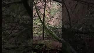 Как бросить курить Кто больше женщина мама медведь или человеческая женщина Ужин в лесу