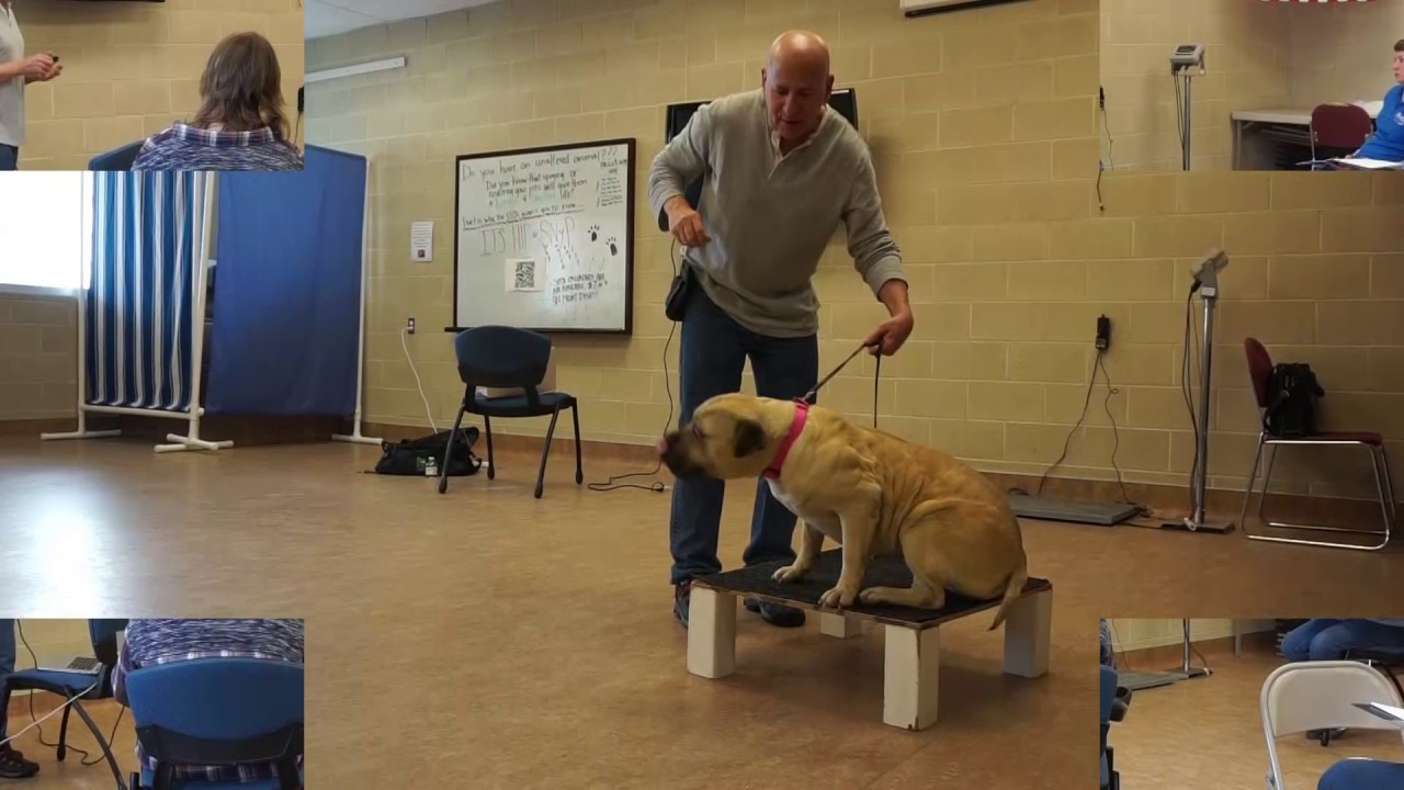 Joel Silvermans Dog Trainer Certification Course Part I Youtube