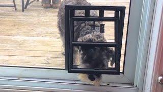 Doggy Door Difficulties