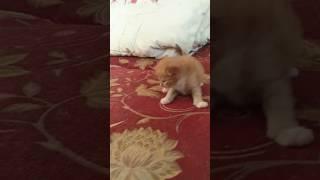 Маленький кот)